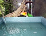 Bain à débit normal